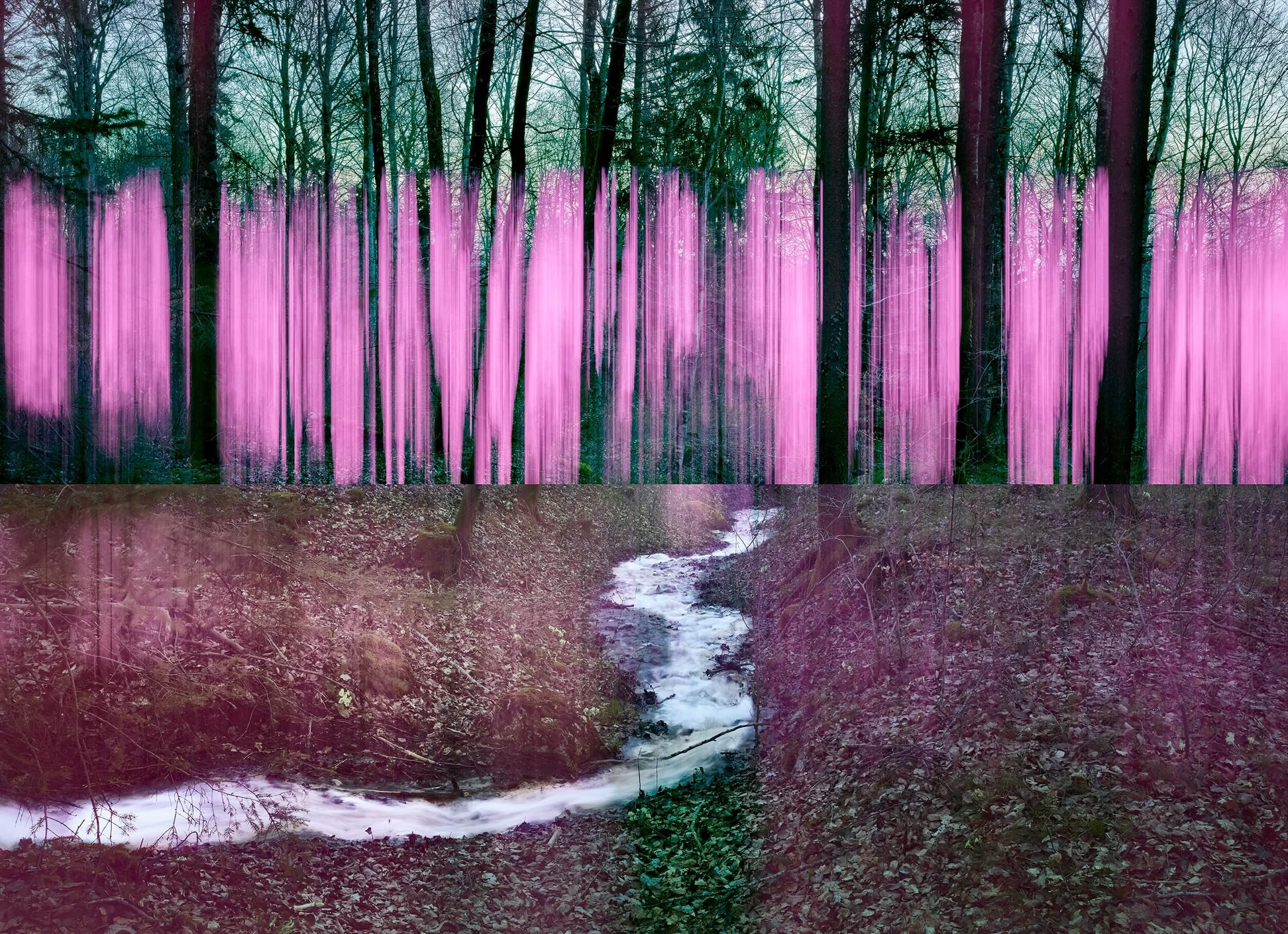 pinkforest03 copie2